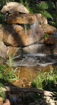 Landscape Paintings And Photographs Australian Native Garden