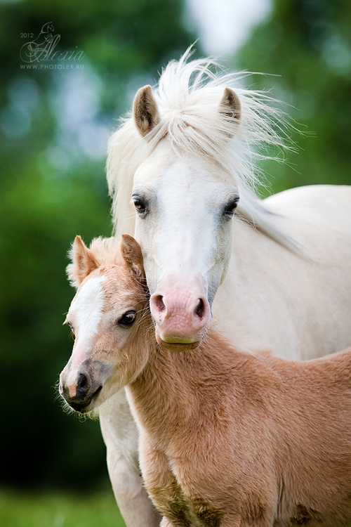 Baby Animals Beautiful Horses Mare And Sweet Foal Photography Magazine Leading Photography Magazine Bring You The Best Photography From Around The World