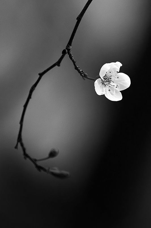 Inspiration Black And White Photography Simple