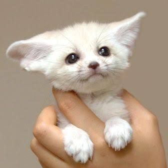 Baby Animals Image Result For White Japanese Fox Baby Photography Magazine Leading Photography Magazine Bring You The Best Photography From Around The World